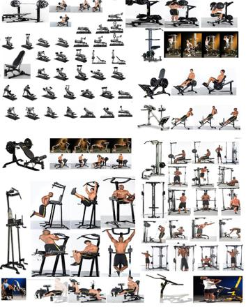 exercice musculation banc multifonction