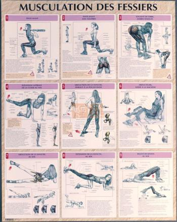 exercice musculation fessier